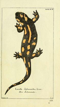 Gemeinnüzzige Naturgeschichte des Thierreichs bd. 4 plates  Berlin ;bei Gottlieb August Lange,1780-1789.