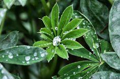 Rain that looks like jewels - Blarney, Ireland.