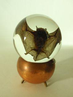 Preserved Wet Specimen Bat in Glass Globe