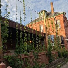 Hops Garden at the #Boston #Brewery