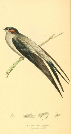 n19_w1150 by BioDivLibrary, via Flickr