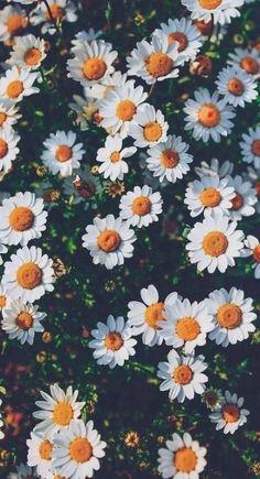 Sunflower Iphone Wallpaper, Daisy Wallpaper, Flower Phone Wallpaper, Trendy Wallpaper, Nature Wallpaper, Wallpaper Quotes, Spring Wallpaper, Wallpaper Wedding, Fashion Wallpaper