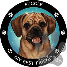 Puggle My Best Friend Dog Breed Magnet Puggle Puppies, Fluffy Puppies, Dogs And Puppies, Yorkies, Chihuahua, Best Dog Breeds, Best Dogs, Love Your Pet, Your Dog