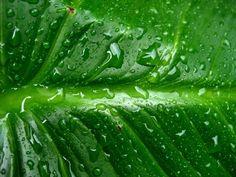 Groene HD Achtergronden   Bureaublad Achtergronden