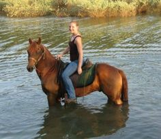 Looks great, prob sold. Chestnut Morgan Horse Gelding, Reg Morgan Gelding in Oregon. DreamHorse.com is the premier horse classifieds site with horses for sale, lease, adoption, and auction, breeding stallions, and more.