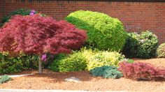 If you have a large foundation bed, don't think that you have to fill the whole thing. As this picture shows, 'negative space' in a shrub bed can be effective.               This is Nice!