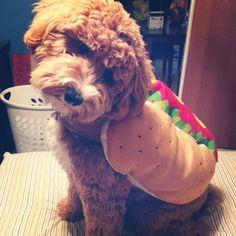 Goldendoodle hotdog Halloween costume!