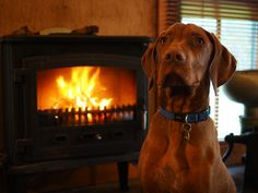 Leave me by the fire. I'll be good!