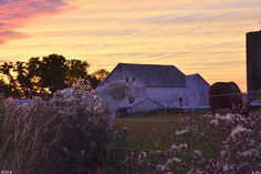 Horse Farm At Sunset by Lisa Wooten