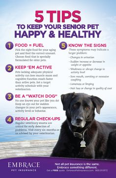 Do you have a senior pet? Be sure you are giving him the love and CARE he needs.  For more pet advice and articles, click the image.