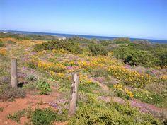The Next Big Thing, West Coast, Plants, Planters, Plant, Planting, Planets