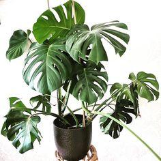 Green feeling today, ge mig vår nu! Green, Plants, Instagram, Plant, Planets