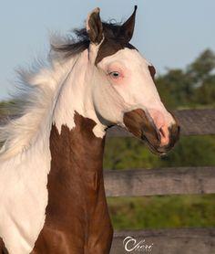 Selwood Park Skyfall horse