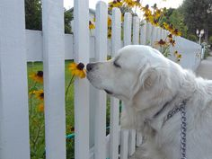 Dog who is happy to stop and smell the flowers. | 35 Dogs That Will Make Your Day Instantly Better