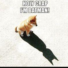 "Christy Bosco  op Instagram: ""There is a little Superhero in all of us! #hero #funny #batman #friday #wearebatman #cape #batfamily #comicbooks #heroes #batmanvsuperman #weekend #superheroes #superman #darkknight #superhero #batgirl # #fanart #fox @cindy8691 @jasonmongiovi thanks for the share """