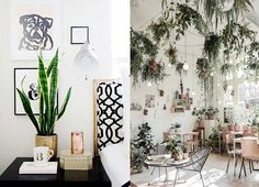 Whether you live in a cosy apartment or in a massive freestanding home, bringing greenery into your home, no matter what size it may be, allows for balance and depth in any interior. Plants and greenery are the staples of living – add these to your interiors and enjoy the many benefits they offer.