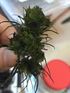 #preserved flowers #프리저브드플라워 #그린석죽