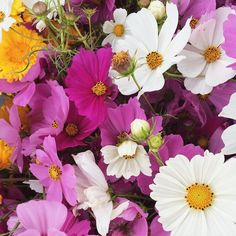 SnapWidget | Веселая рынок флора #SeedsColor
