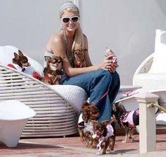 http://www.googlesportsclub.com/celebrity/female-celeb/paris-hilton-names-dog-prince-hilton/