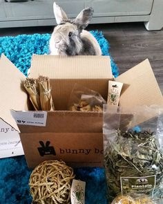 Since we began we've loved every happy #bunny pic sent in! Order your last ever #BunnyBox > https://getbunnybox.com/bunny-box/