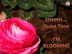 http://toctown.com Be encouraged, even in the silent moments, things are happening. #SBOCulture #kissingLIFE