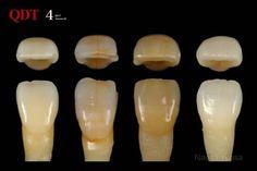 Dental Technician, Dental Laboratory, Dental Art, Dentistry, Teeth, Hands, Smile, Album, Education