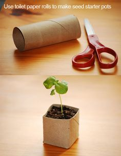 Use toilet paper rolls to make starter pots. #gardening