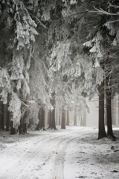 winter wonderland in the forest