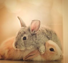 """""""He likes to do that. Squish my head. It's what we bunnies do. Squish each other's heads. It's quite exhilarating, really. You should try it sometime. Squish someone's head, I mean."""""""