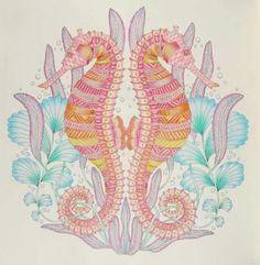 Millie Marotta Animal Kingdom colouring book