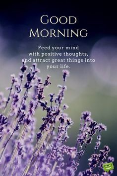 Good morning. Feed your mind with positive thoughts and attract great things into your life.