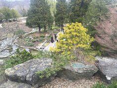RBG opens rejuvenated Rock Garden Burlington Ontario, Botanical Gardens, Stepping Stones, Canada, Rock, Outdoor Decor, Stair Risers, Skirt, Locks