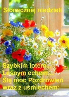 Good Night Image, Good Morning Good Night, Good Morning Images, Good Morning Quotes, Blooming Flowers, Love Flowers, Beautiful Flowers, Sunday Greetings, Morning Greetings Quotes