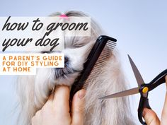 Nutrition Guide, Diet And Nutrition, Dog Salon, Guide Dog, Grooming Kit, Homemade Dog, Dog Treats, Dog Pictures, Best Dogs