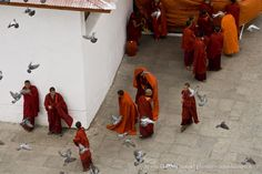 Bhutan, Thimphu. Monks and pigeons