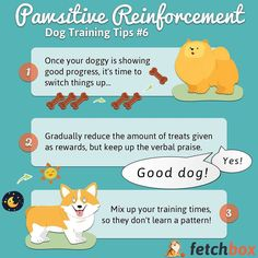 Pawsitive Reinforcement Training Tips If you're not careful they'll you instead! Psychology Research, Dog Health Tips, Educational Psychology, Best Dog Training, Dog Care Tips, Poodles, Dog Toys, Instagram Feed, Best Dogs