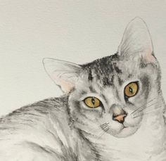 Cat Painting, Pet portrait of Ollie the bengal cat F2 Savannah Cat, Savannah Chat, Cat Whisperer, Wild Ones, Dog Portraits, Bengal, Cat Breeds, Cat Lady, Photo Galleries