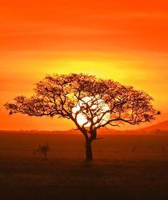 Serengeti National Park by Barbara Fleming
