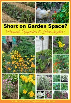 If you are short on Garden space, try combination gardening.  Annuals, perennials, vegetables and herbs are great companions and attract beneficial insects too.  Find out how at thegardeningcook.com/garden-charmers-combine-perennials-vegetables #perennialgardenideas