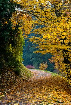 wistfullycountry:  Autumn Peace by episa on Flickr.