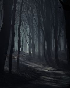 Dark woods, darker woods, as the twilight fades,  slowly shadows, slower shadows nestle in the haze.  softly falls, softer falls the last leaves of the  trees, the sunset's yellow laughter echoes through the glistening eaves.