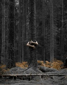 Photography Classes Free plus Photographing Nature With Your Digital Camera than Photography Jobs In Los Angeles of Photography Backdrops Los Angeles Nature Photography Tips, Forest Photography, Conceptual Photography, Photography Classes, Creative Photography, Portrait Photography, Photography Backdrops, Photography Hashtags, Landscape Photography