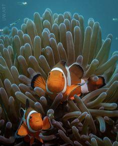 Underwater Art, Underwater Photography, Animal Photography, Ocean Art, Ocean Life, Sea Explorer, Tropical Fish Aquarium, Cool Fish, Marine Fish