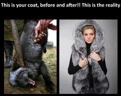 The rightful owner of your fur coat was murdered in it.   All is vanity. SHAME