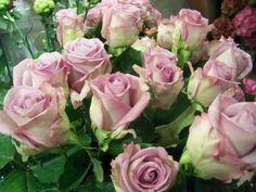rosas de un color espectacular
