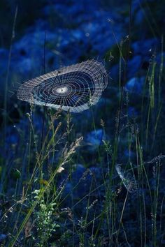 """""""Rhapsody in Blue"""" -- by Rucsandra Calin via posted by wowtastic-nature: Art Et Nature, Science And Nature, Spider Art, Spider Webs, Rhapsody In Blue, Foto Art, Jolie Photo, Amazing Spider, Natural Wonders"""