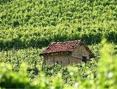 """Ciabòt in Barbaresco. The """"ciabòt"""" is a small building typical of the Piedmontese vineyards that arises from a set of work-related needs of viticulture. Piedmont Italy, Small Buildings, Our World, Terra, Cottages, Castles, Vineyard, Landscape, Country"""