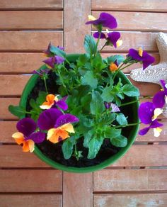 Where oh where can I get orange and purple pansies?  I love them.