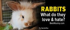 Find out here what rabbits love & what they hate & why. As a bunny parent, stick to the loves, stay away from the hates, and you will have one very happy healthy bunny. www.best4bunny.com