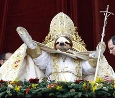 Sloth pope | The 25 Greatest Sloths The Internet Has EverSeen